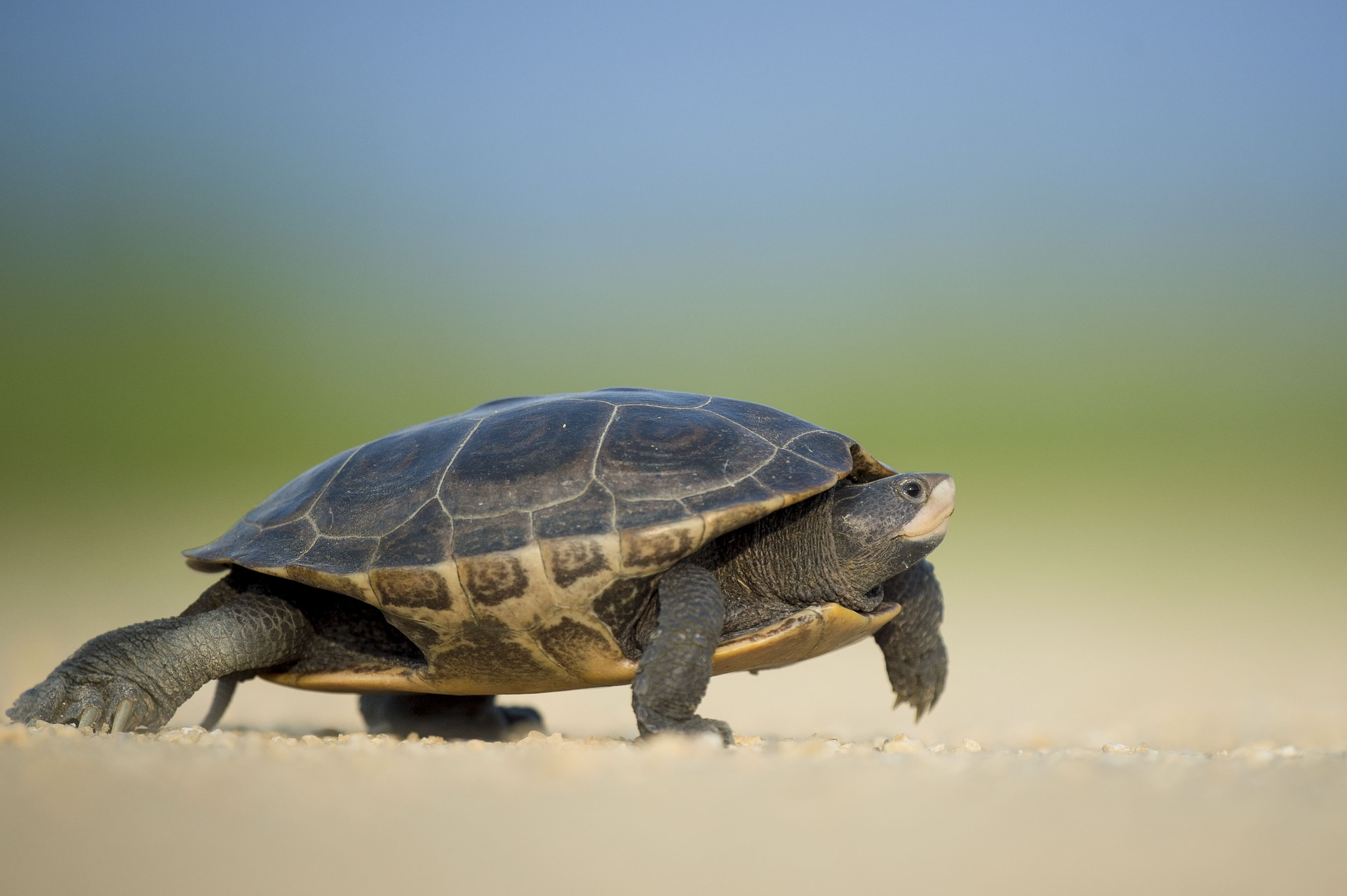 Slow and steady wins the race using clickfunnels